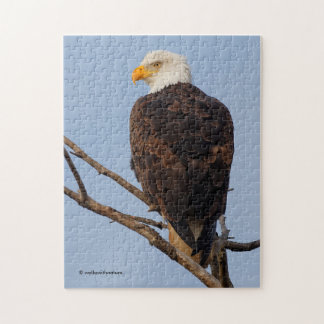 Beautiful Bald Eagle in a Tree Jigsaw Puzzle