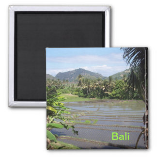 Beautiful Bali rice paddies Square Magnet
