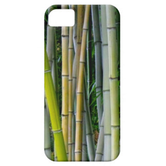 Beautiful bamboo grove iPhone 5 cases