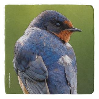 Beautiful Barn Swallow Trivet