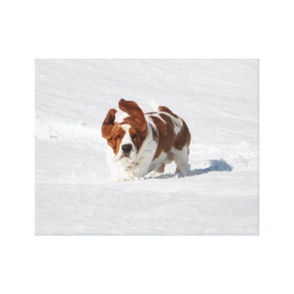 Beautiful Basset Hound in Snow on Canvas Canvas Print