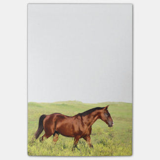 Beautiful Bay Horse Post-it Notes