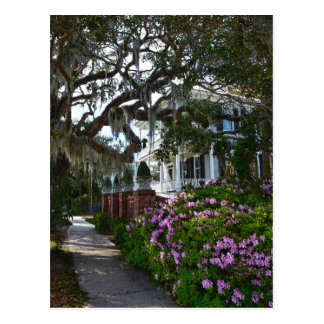 Beautiful Beaufort, South Carolina Postcard