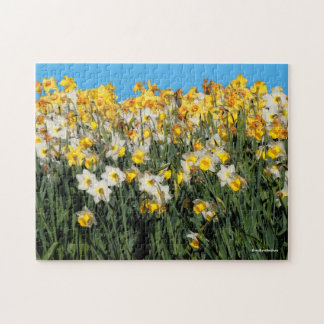 Beautiful Bed of Daffodils Jigsaw Puzzle