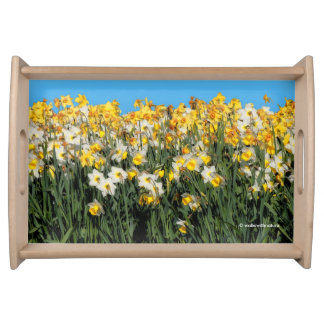 Beautiful Bed of Daffodils Serving Tray