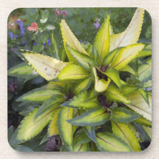 Beautiful Big Bright Green Leaves Coaster