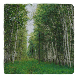 Beautiful Birch Tree Forest Art Trivet