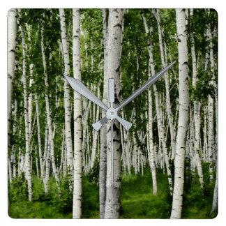 Beautiful Birch Tree Forest Square Wall Clock