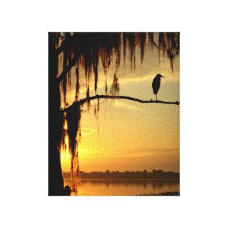 Beautiful Bird Perched on Shadowed Tree Canvas Print
