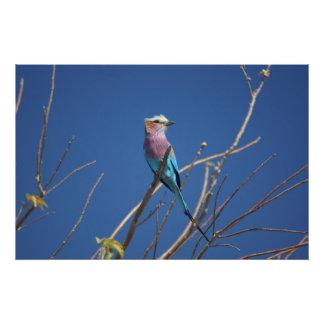 BEAUTIFUL BIRD PHOTO PRINT