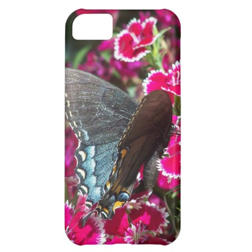 Beautiful Black and Blue Swallowtail Butterfly iPhone 5C Cover