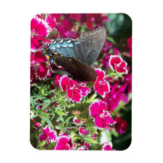 Beautiful Black and Blue Swallowtail Butterfly Vinyl Magnet