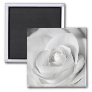 Beautiful Black and White Rose Square Magnet