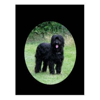 Beautiful black briard dog postcard