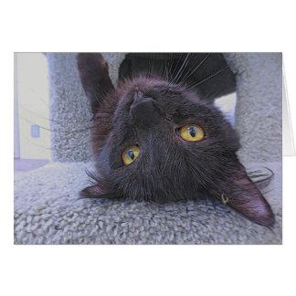 Beautiful Black Cat Card