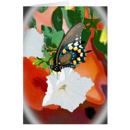 Beautiful Black Creatures - Swallowtail Butterfly Cards