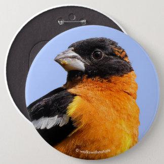 Beautiful Black-Headed Grosbeak in a Tree 6 Cm Round Badge