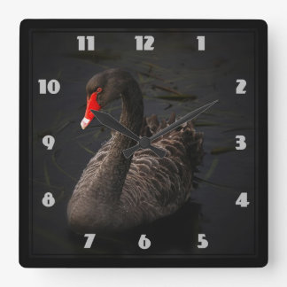 Beautiful Black Swan with a Bright Red Beak Wallclocks