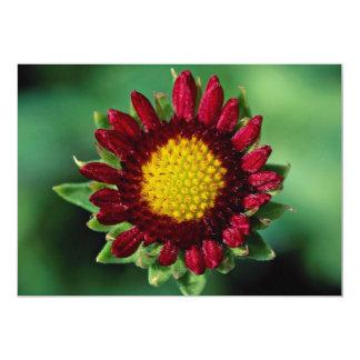 Beautiful Blanket flower Custom Announcements
