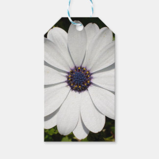 Beautiful Blossoming White Osteospermum Gift Tags