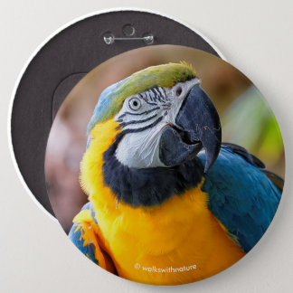 Beautiful Blue and Gold Macaw 6 Cm Round Badge