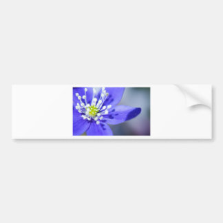 Beautiful Blue Flowers Bumper Sticker