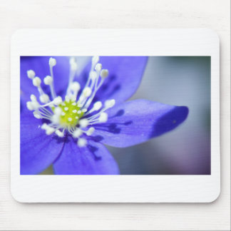 Beautiful Blue Flowers Mouse Pad