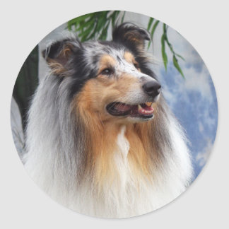 Beautiful blue merle Collie dog sticker, gift idea Classic Round Sticker