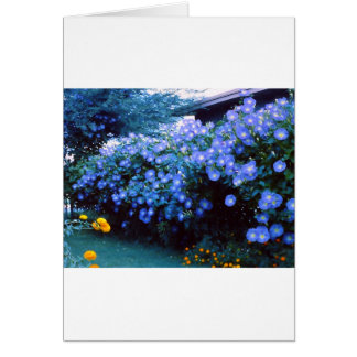 Beautiful blue morning glory flowers greeting card