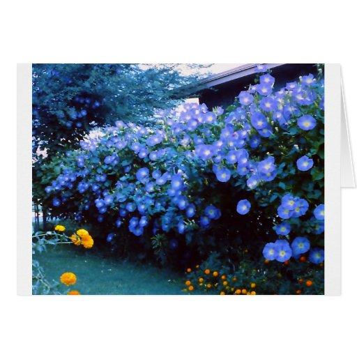Beautiful blue morning glory flowers greeting cards