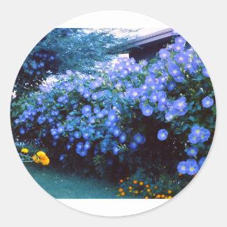 Beautiful blue morning glory flowers round sticker