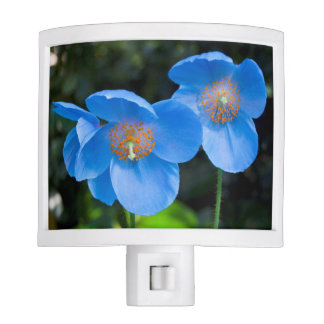 Beautiful Blue Poppies Floral Photo Nite Light