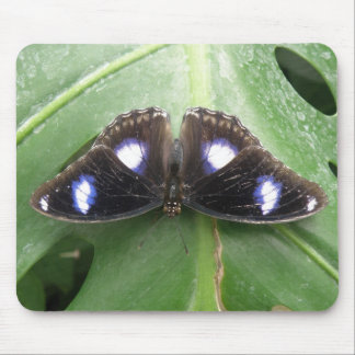 Beautiful Blue Spotted Butterfly Mousepad