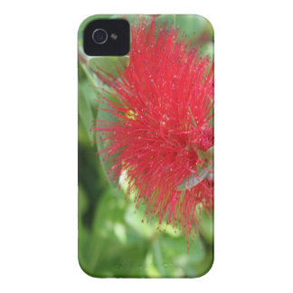 Beautiful Bottle Brush Flower With Garden Backgrou iPhone 4 Case