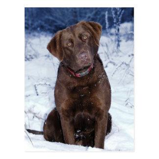 Beautiful Brown Dog Design Postcard