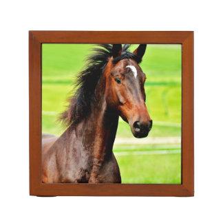 Beautiful Brown Horse Green Grass Pencil Holder