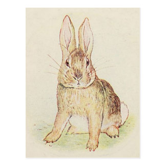 Beautiful Bunny Postcard