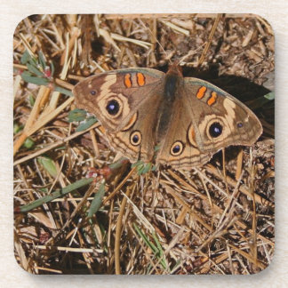 Beautiful Butterfly Beverage Coaster