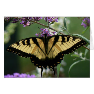 Beautiful Butterfly Note Card, envelopes included Note Card