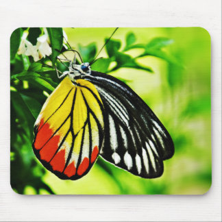 Beautiful Butterfly on Flowers Mouse Pad