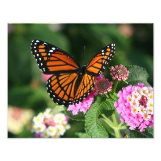 Beautiful Butterfly on Lantana Flower Photo Print