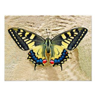 Beautiful Butterfly Photo Print
