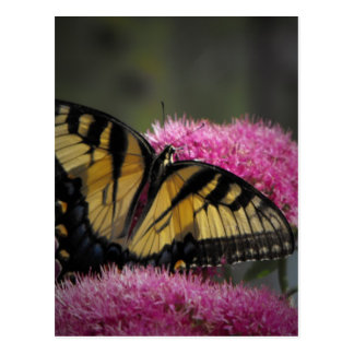 Beautiful Butterfly Post Card