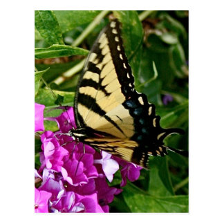 Beautiful Butterfly Postcard