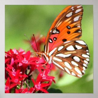Beautiful Butterfly print