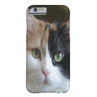 Beautiful Calico Cat Barely There iPhone 6 Case