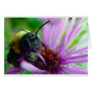 Beautiful Carpenter Bee Greeting Card