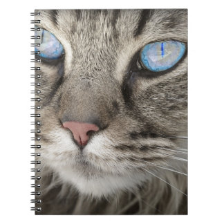 Beautiful cat close up notebooks