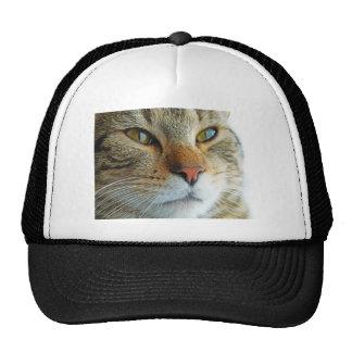 Beautiful Cat Hats