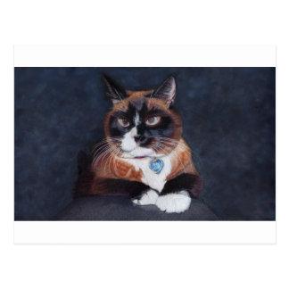 Beautiful Cat Postcard